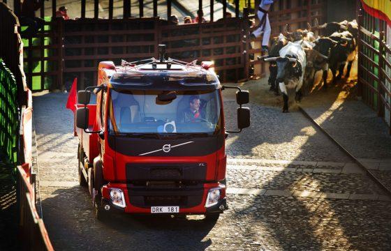 Volvo FL opgejaagd door kudde stieren