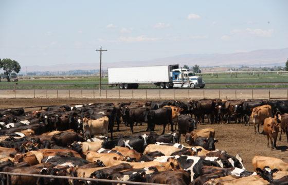 Koeien, zoutvlakten, een fraaie testtruck