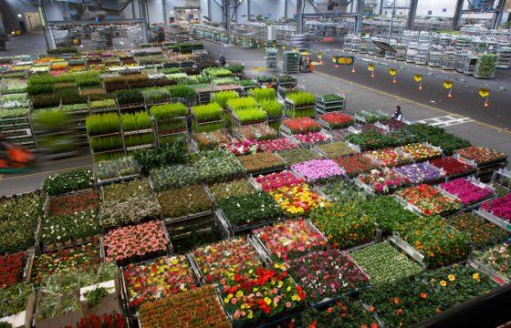 sierteeltsector